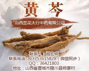 供应列表右侧广告-黄芩-图4