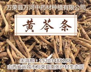 供应列表右侧广告-黄芩-图5